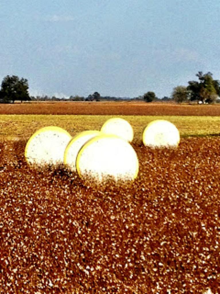 Round Cotton Bales