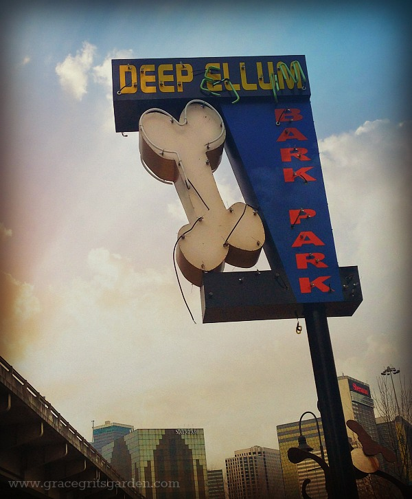 Deep Ellum Bark Park -Six blocks from my house