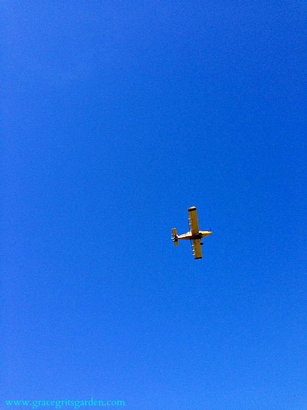 clear blue sky above Tate Farms, Miss Co, Ark