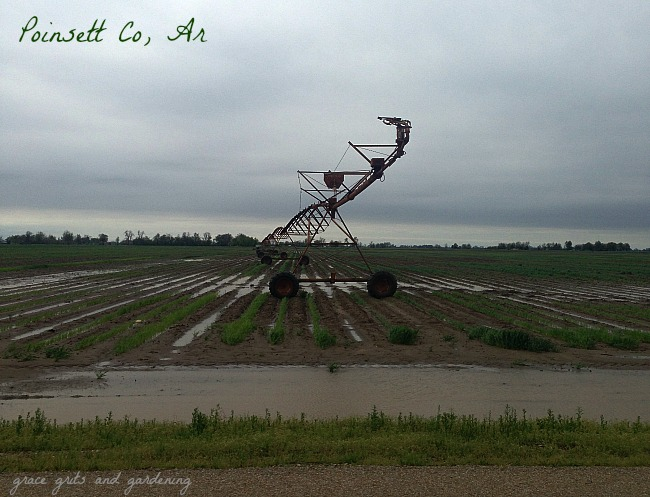 irrigation pivot, poinsett co