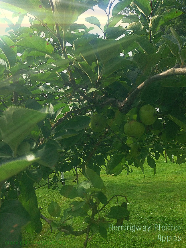 Writing Like Me at Hemingway-Pfeiffer (apple orchards)