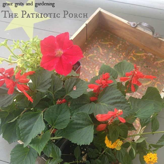 the patriotic porch - red filler plants