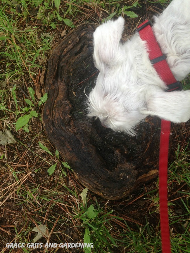 natural dog bowl in tree root