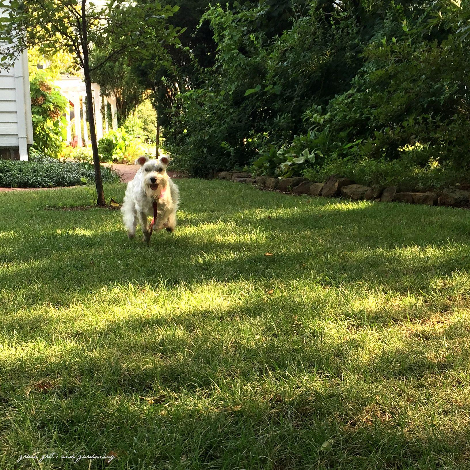 Annabelle chasing summer
