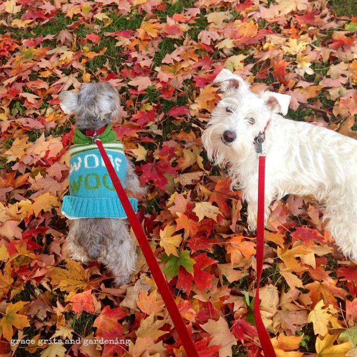 Fall, y'all!