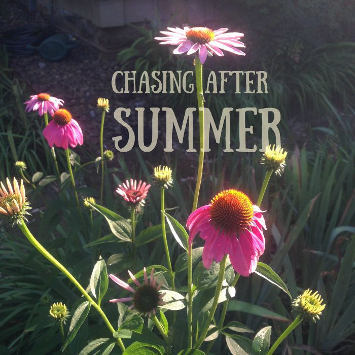 Chasing after summer