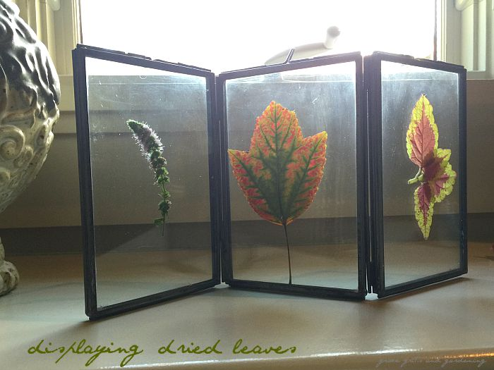displaying dried leaves