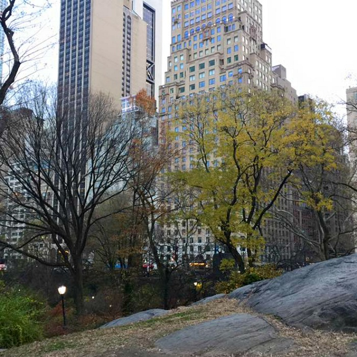 A Tree Grows in New York
