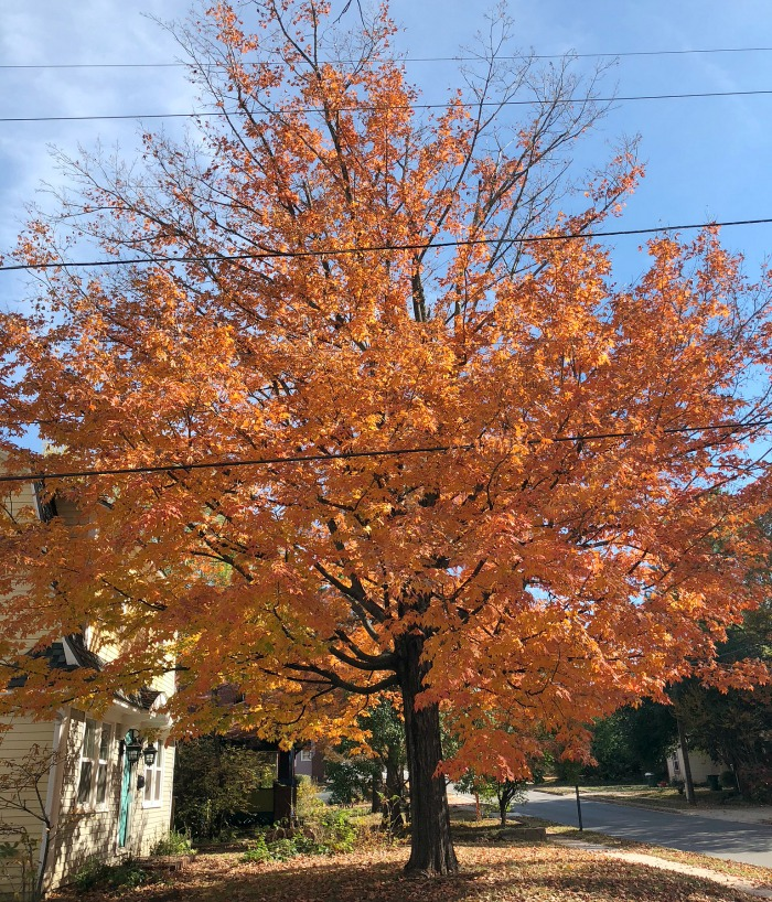 the amazing grace of autumn in Fayetteville Ar