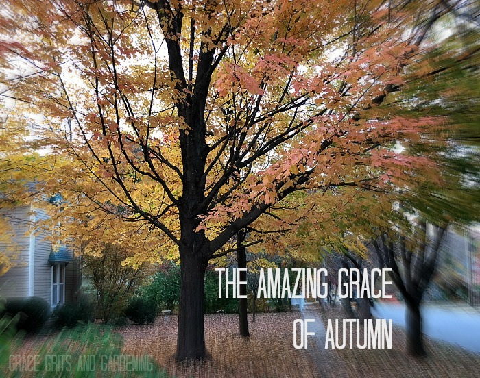 the amazing grace of autumn