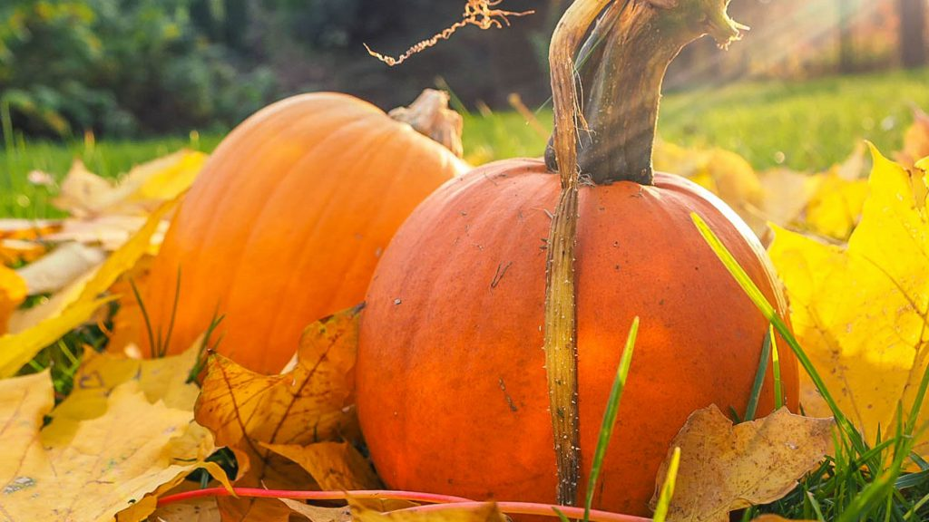 How to choose a pumpkin and have a fantabulous october.