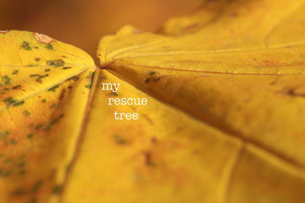 my rescue tree